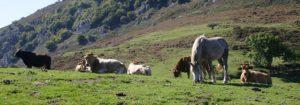 Agroturismo - Turismo rural