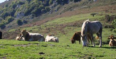 Turismo Rural - Agroturismo