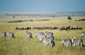 Turismo ecológico - Ecoturismo