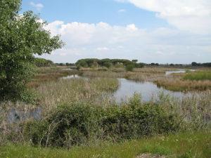 Parque Nacional y Natural de Doñana - Ecoturismo España