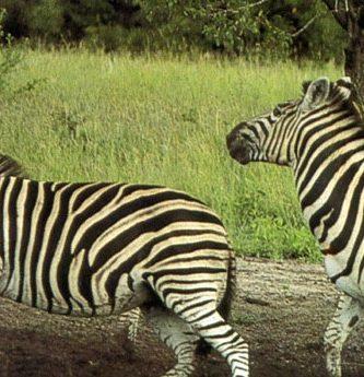 Turismo ecologico por Africa