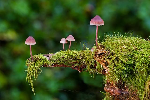Observación de la flora en ecoturismo