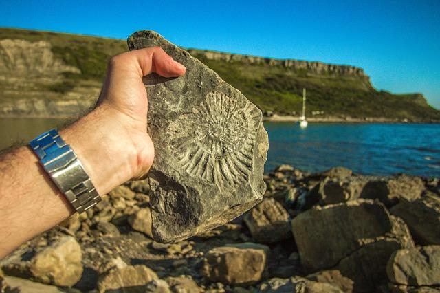 Actividades que se realizan en el ecoturismo   Observar fósiles