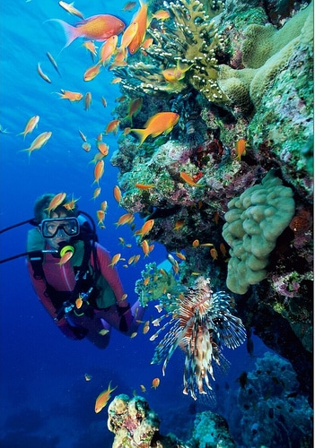 Actividades ecoturismo - Submarinismo