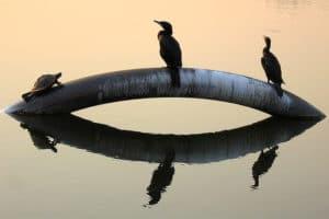Ecoturismo - observación de la fauna