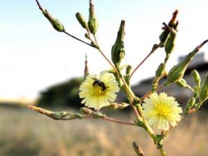 Ecoturismo - observación de la flora