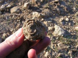 Observación de fósiles - turismo rural