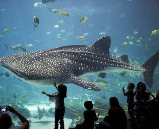 acuario más grande del mundo