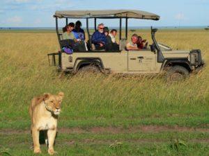 Safari por sudafrica