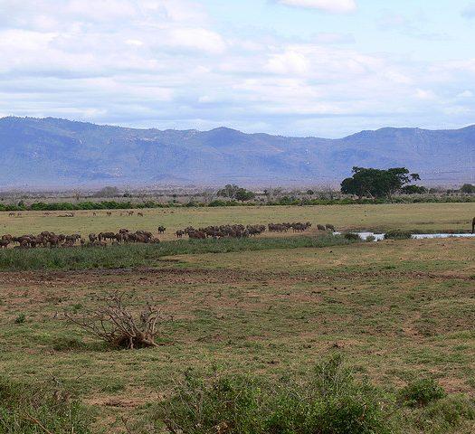 Safari kenia que visitar