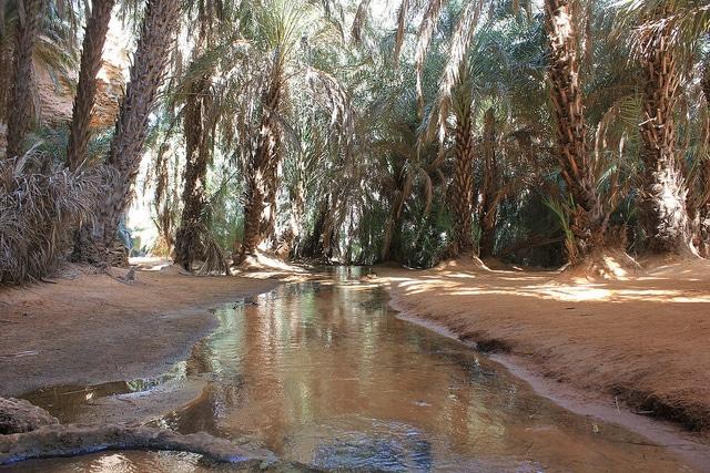 El oasis en el desierto de Adrar