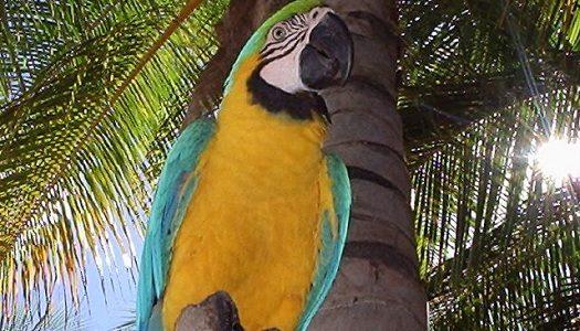 El descanso ideal en Isla Margarita