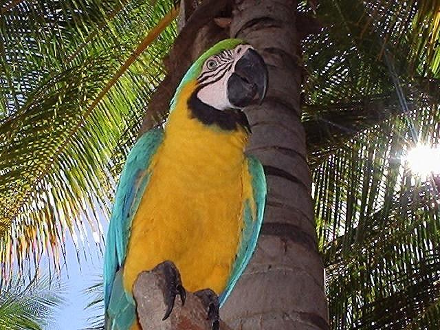 Isla Margarita