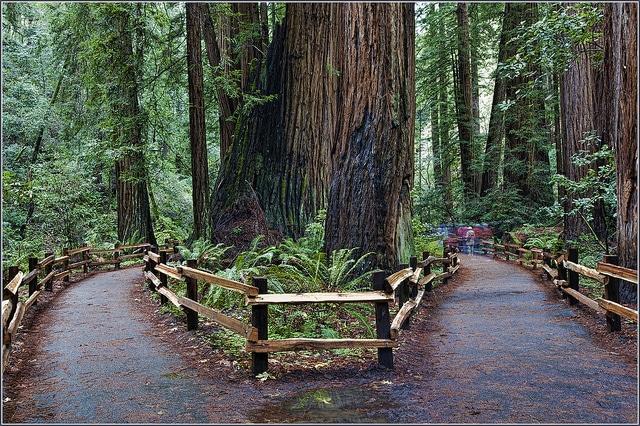 Paseando entre secuoyas centenarias por Muir Woods y Sausalito