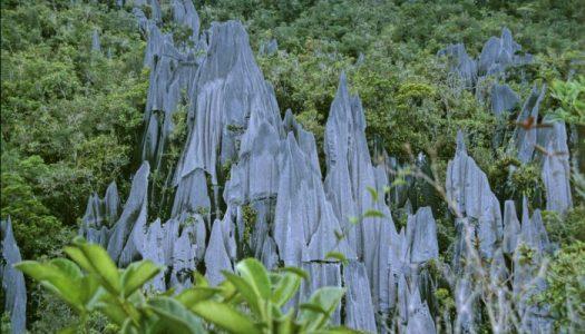 Las agujas calcáreas del Parque Nacional Gunung Mulu