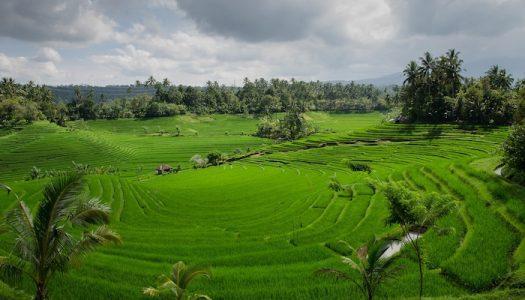 Cuál es la mejor época del año para viajar a Bali