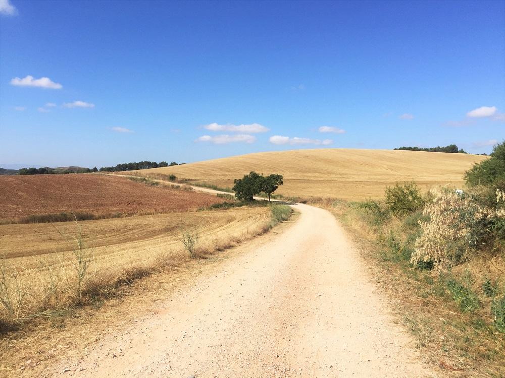 Paisaje Camino de Santiago