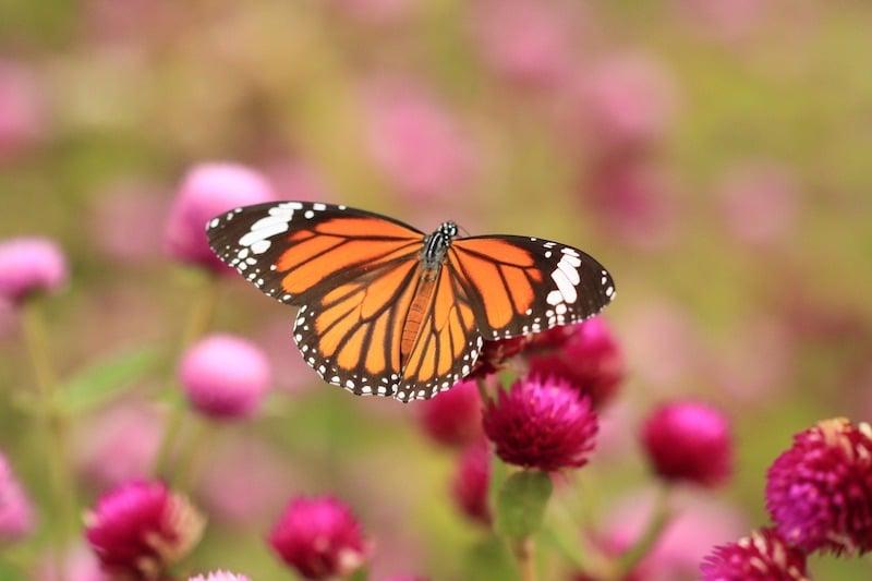 ecoturismo mariposa monarca