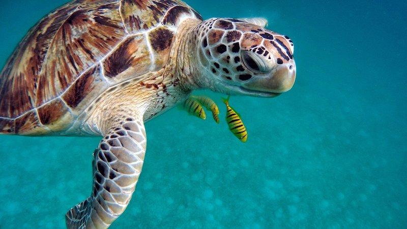 Ecoturismo - nadar con tortugas en Akumal